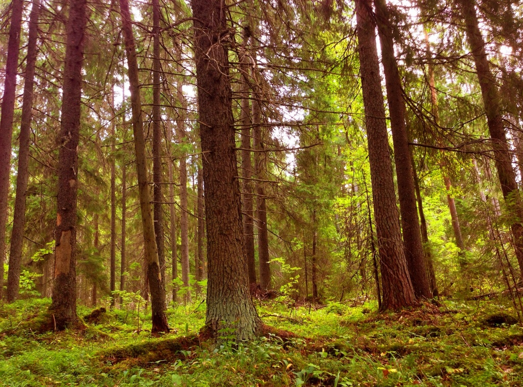 These forests are magical...